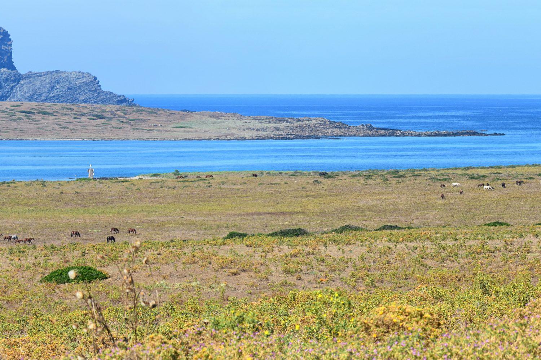 Trekking nel Parco Nazionale dell'Asinara di Maldavventura