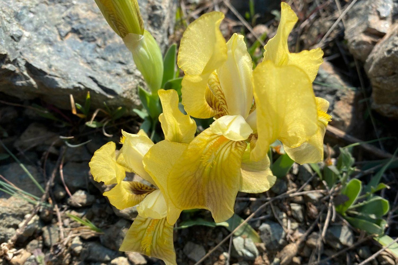 Iris durante il weekend in trekking alla scoperta delle Colline livornesi